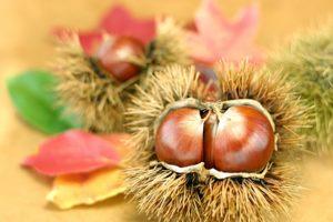 秋の味覚・栗