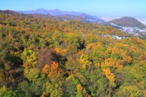 藻岩山の紅葉