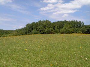 野幌森林公園の野原