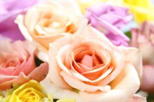 お祝いのバラ