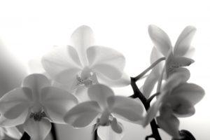 喪中 蘭の花